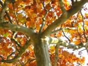 Tree along the Spree