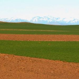 Farm Fields, US2, WA