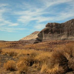 Petrified Desert