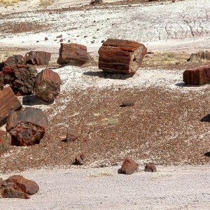 Petrified Forest Desert