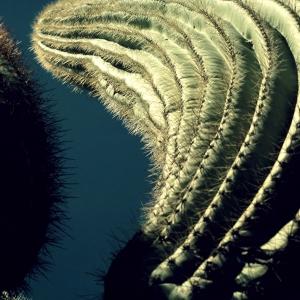 Saguaro, Phoenix