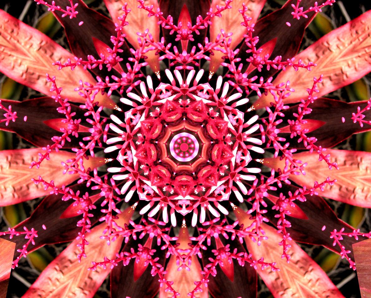 Ti Blossoms