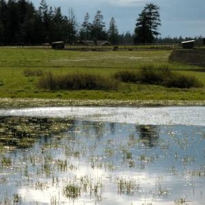 Buckman Lake