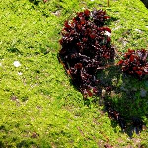 Tidal Rocks, Point Wilson