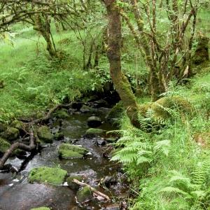 Glen Nant Stream