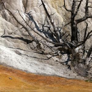 Orange Spring Mound, Yellowstone