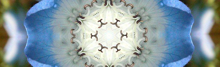 Botanical Kaleidoscopes